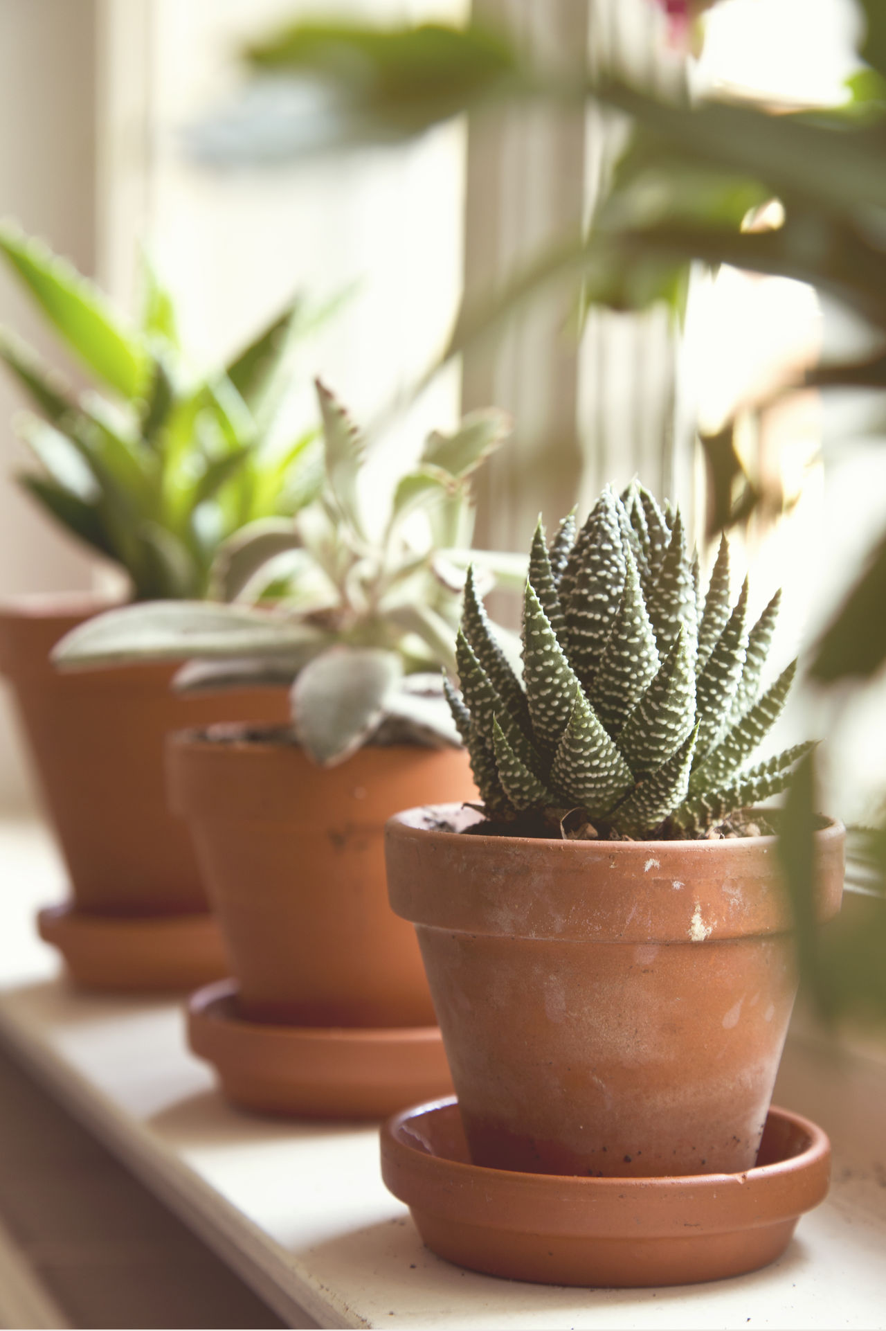 Beautiful stock photos of pflanzen, Beauty In Nature, Berlin, Brown, Cactus