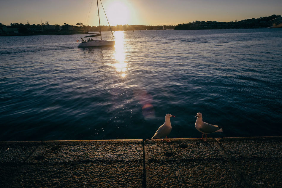 birds and a boat Animal Themes Animal Wildlife Animals Beauty In Nature Bird Birds Boat Day Lake Nature Nautical Vessel No People Outdoors Scenics Sunset Water Yacht Yachting