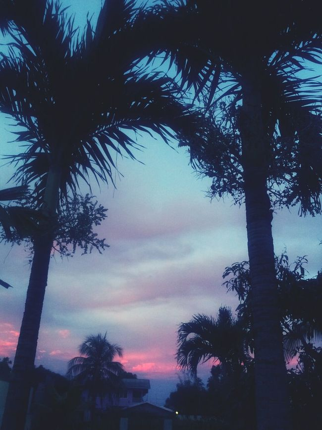 Sunset Pink Sunset Palm Trees Trinidad have a good evening everyone :)