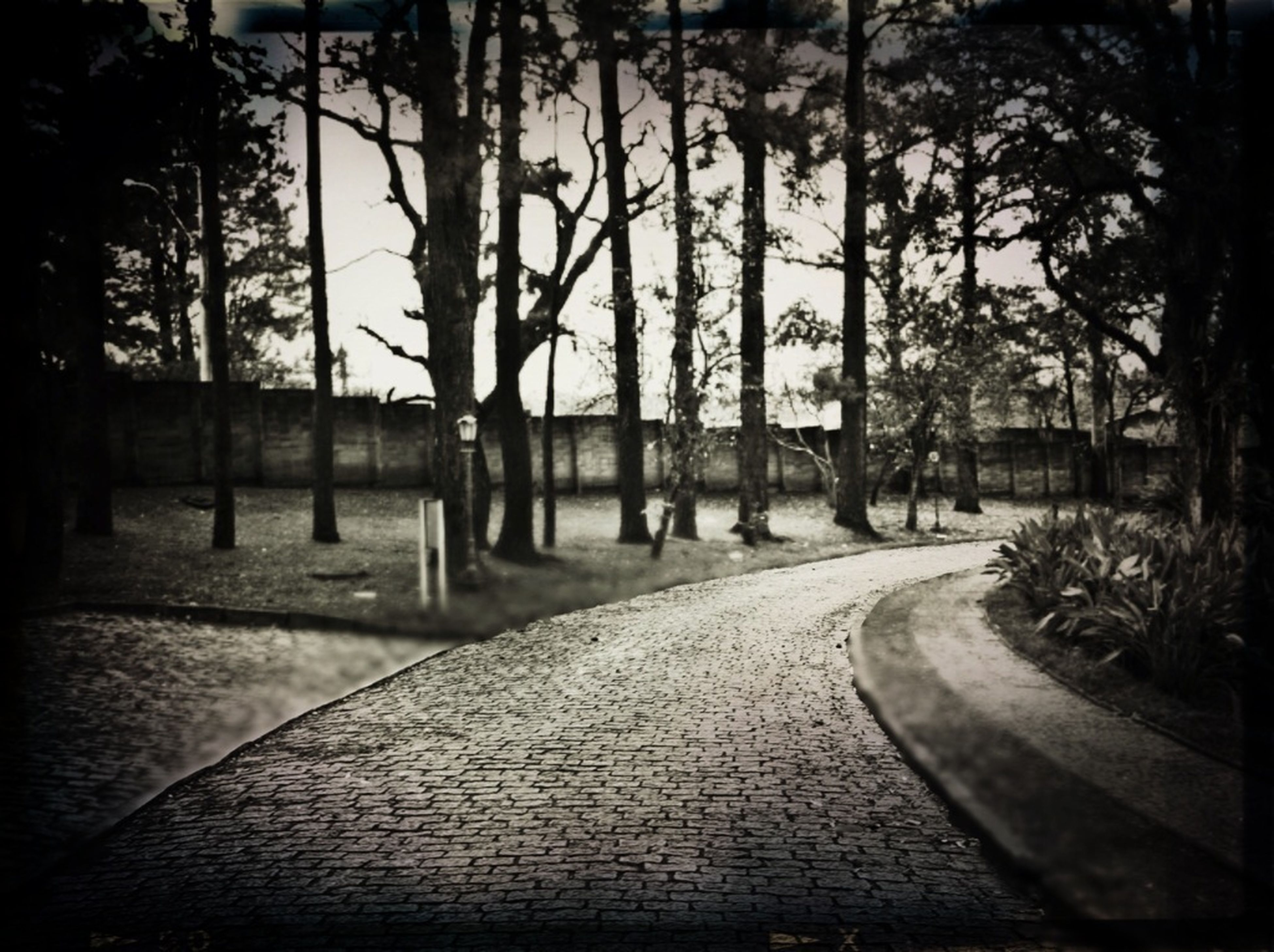 the way forward, tree, transportation, diminishing perspective, vanishing point, road, empty, long, street, tranquility, footpath, sunlight, nature, no people, outdoors, growth, empty road, walkway, absence, street light