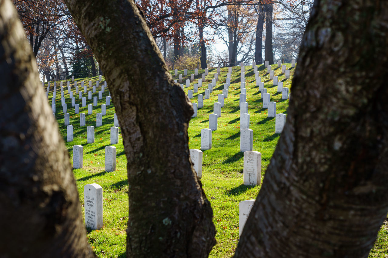 Beautiful stock photos of memorial day, Arrangement, Cemeteries, Cemetery, Day