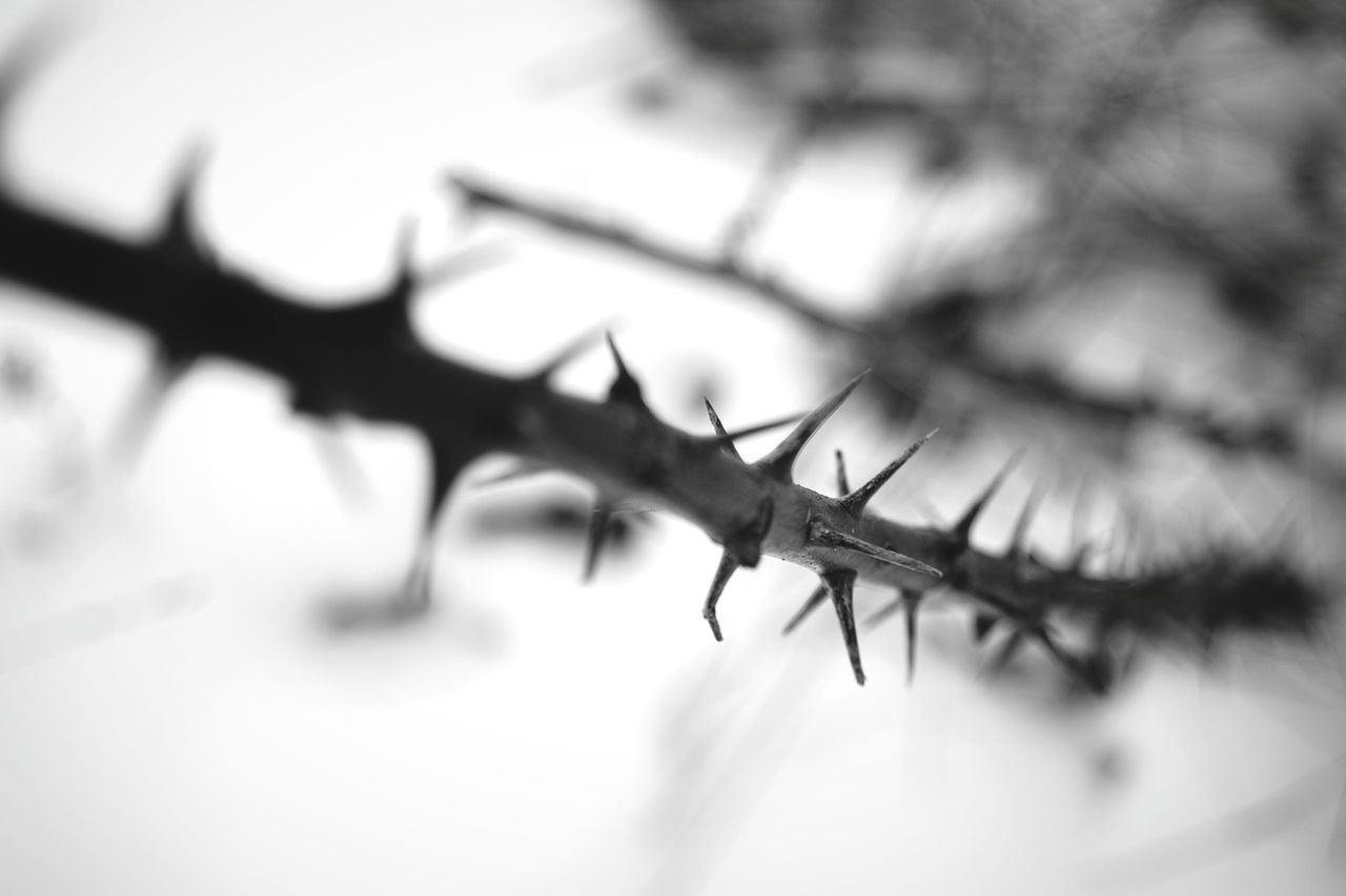 EyeEm Nature Lover Nature Lovers Photography From My Point Of View Spikes Plant Winter Nature Outside Winter Plants Nature Day Eyeem Photo By Ivan Maximov Photo Of The Day Monochrome Photography Black And White Black And White Nature Bokeh