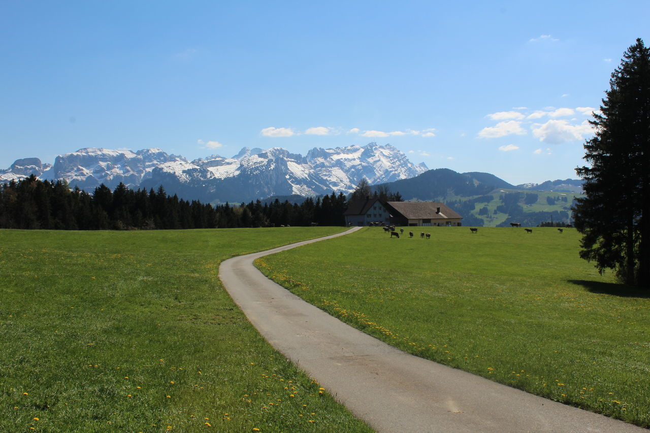 Appenzell Beauty In Nature Blue Country Road Countryside Field Grass Grassy Idyllic Landscape Mountain Nature Road Scenics Sky Switzerland The Way Forward Tranquil Scene Tranquility Typical