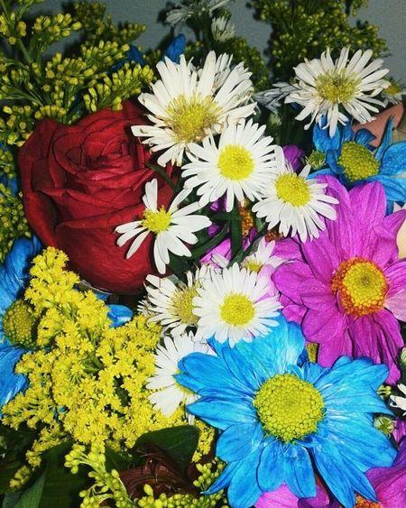 🌹 VSCO Flowers Colors