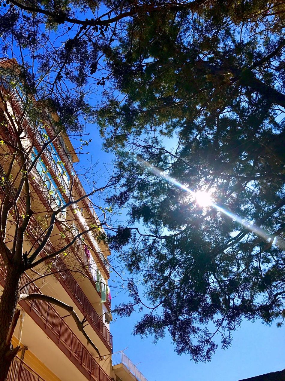 Low Angle View Tree Sunlight Sky Sun Sunbeam Outdoors No People Day Architecture Nature Beauty In Nature City Sicilia Palermo Sicily Photography Photooftheday Photo PhonePhotography Spring Primavera Springtime Instagood Followme