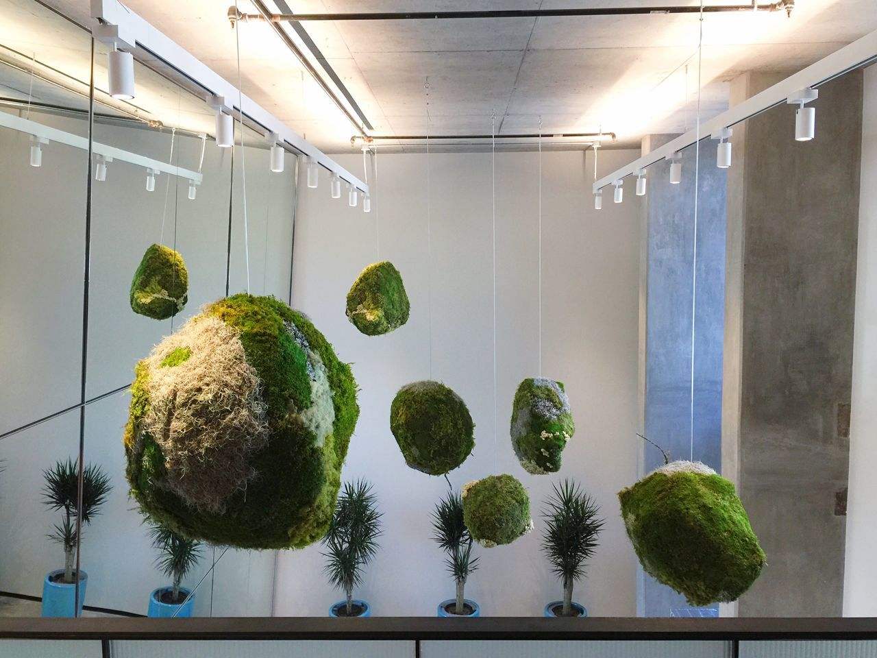 Fifteen weeks ago I got a COMMISSION to Create Hanging Moss Sculpture for Dropbox, and today at last I saw them installed! Moss Balls Organic Moss Balls Reception Room