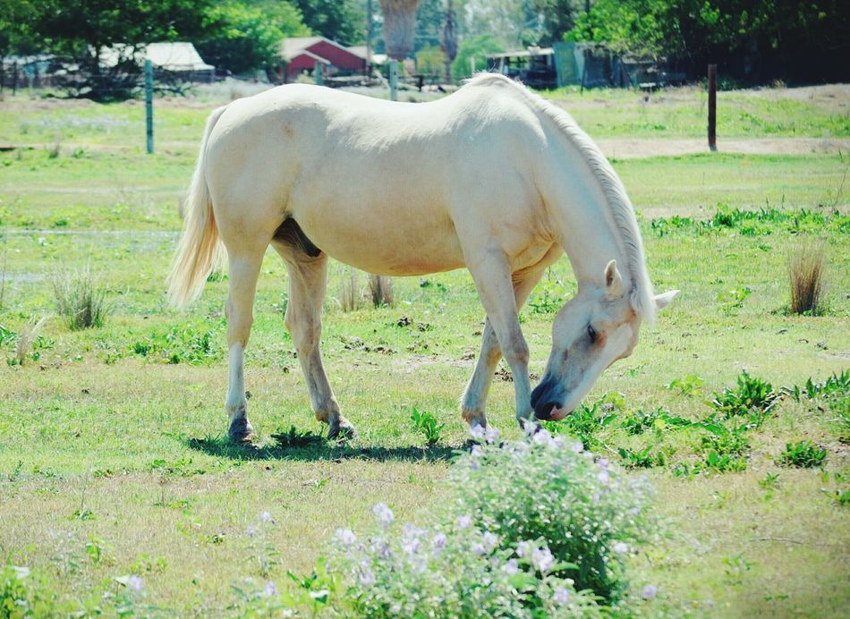 This picture is dedicated to my Beautiful Bestie @melaneebree Friendship Horse Emotions EyeEm Nature Lover Nature Photography Check This Out Nikon D5200 Animal Photography Countryside Today