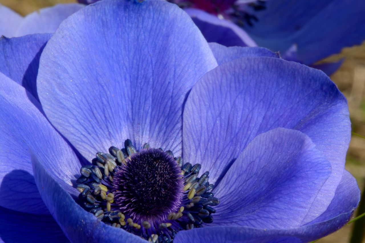 Close-Up Of Blue Flower Blooming On Sunny Day