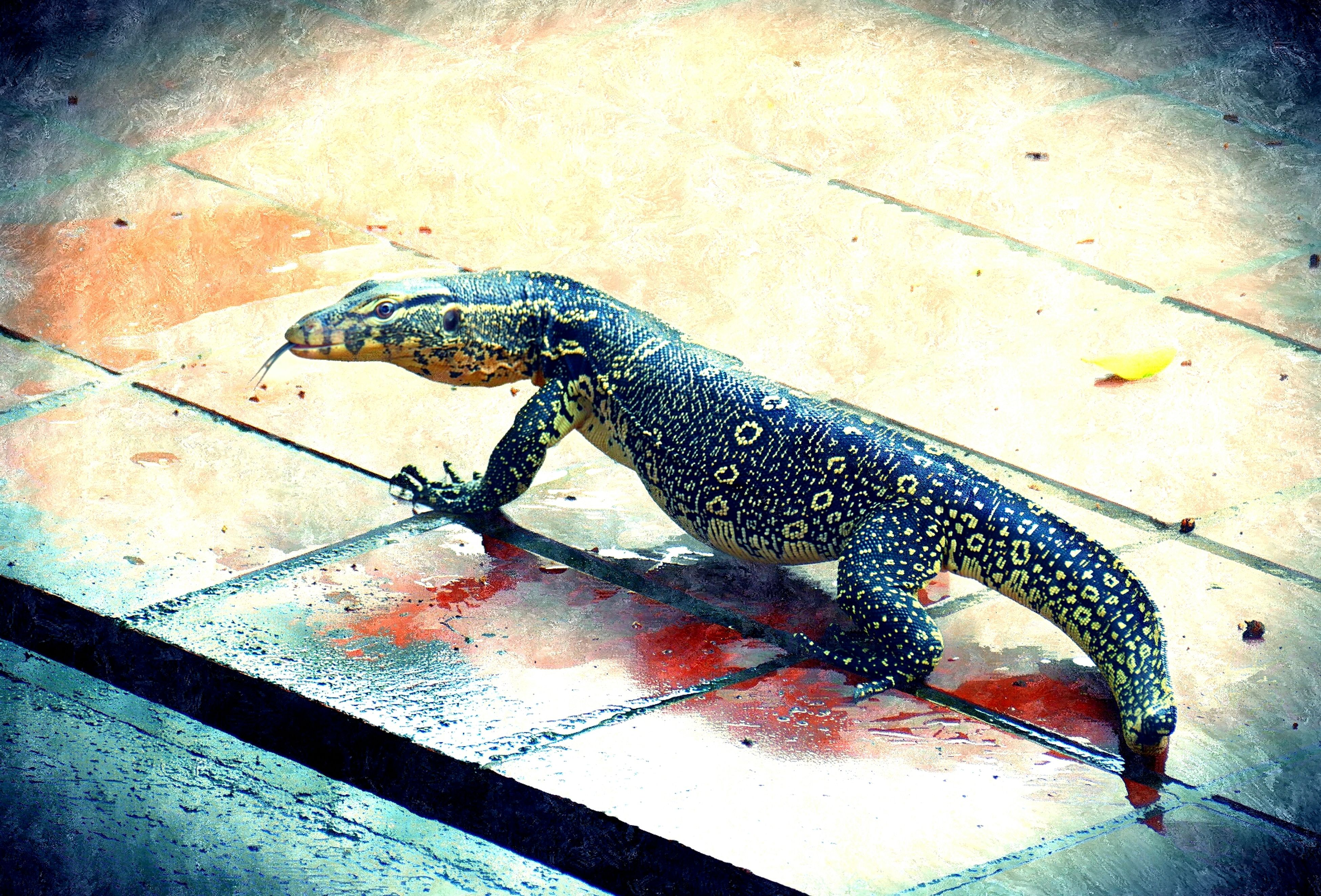 animal themes, high angle view, one animal, animals in the wild, wildlife, fish, reptile, close-up, dead animal, no people, water, indoors, day, lizard, animals in captivity, metal, elevated view, zoology, animal representation