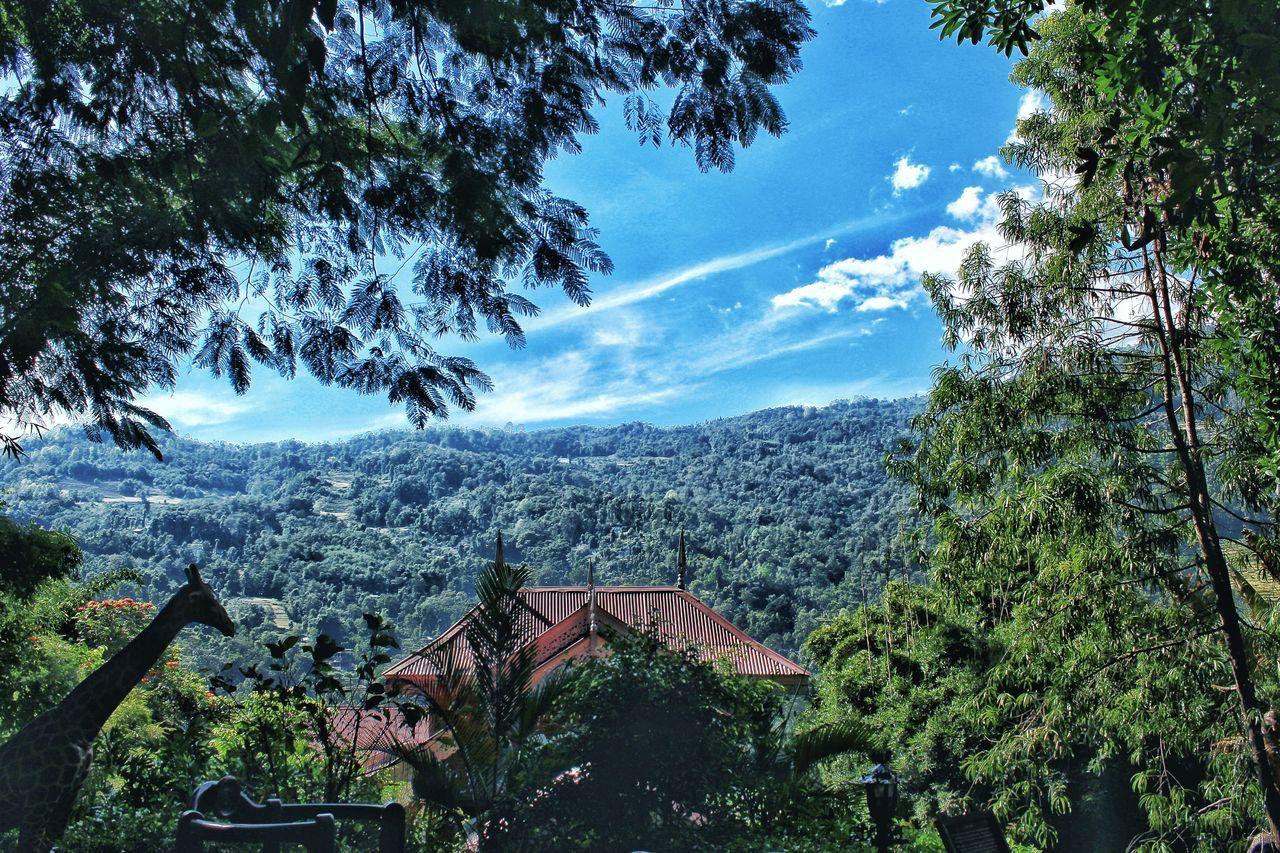 vistas, tree, rustic, architecture, destinations, landscape, mountain, sky, no people, nature, range, day