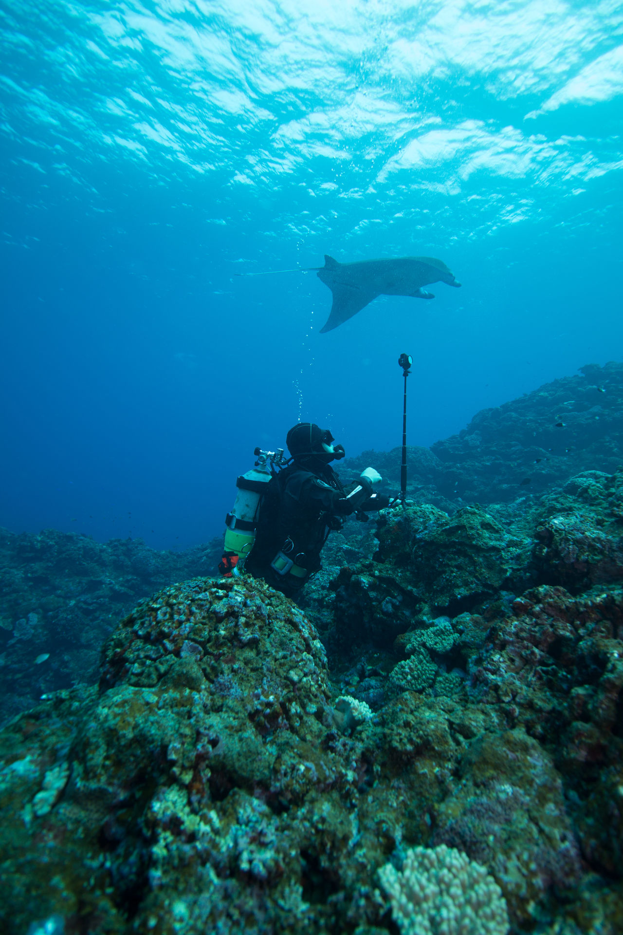 underwater adventure Adventure Animal Themes Animals In The Wild Aqualung - Diving Equipment Coral Day Diver Exploration Leisure Activity Mantaray Nature People Real People SCUBA Scuba Diver Scuba Diving Sea Sea Life Swimming Take Picture Two People UnderSea Underwater Watching A Performance Water
