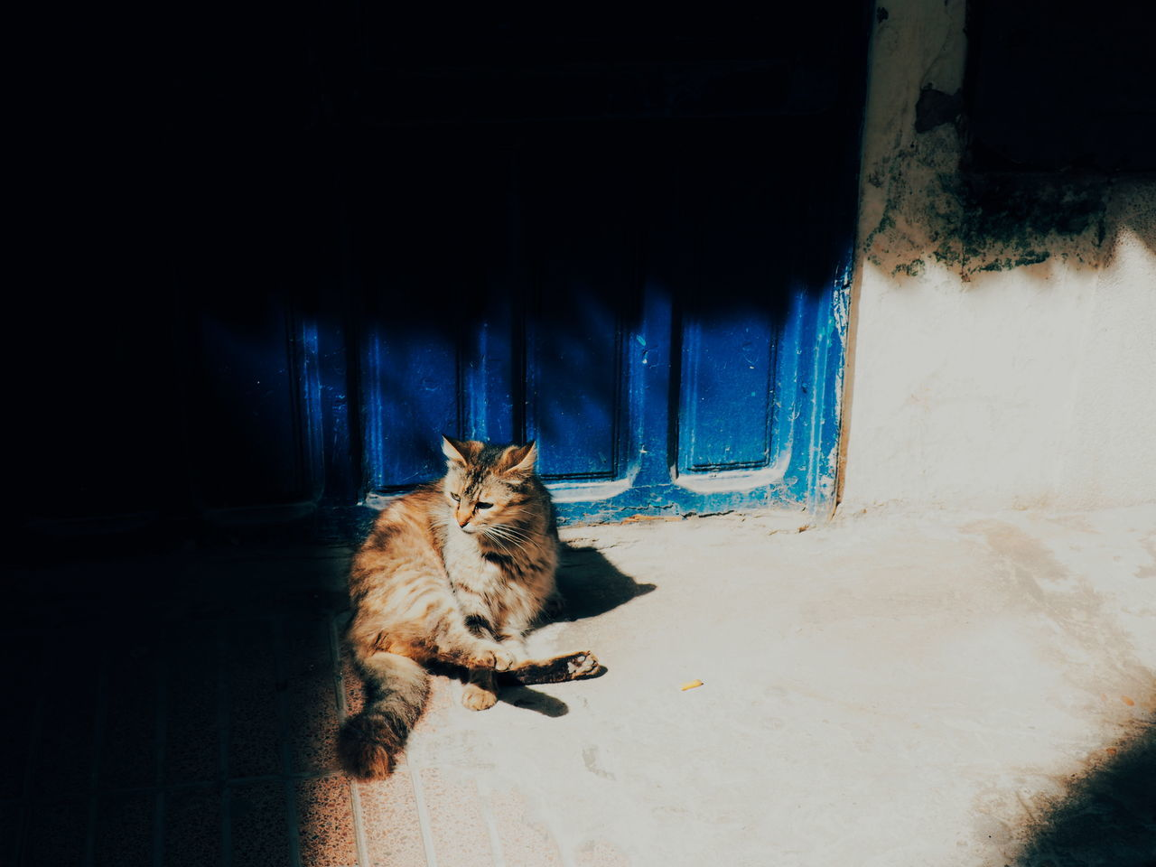 Animal Themes One Animal Mammal Domestic Animals Domestic Cat Pets Feline No People Snow Indoors  Leopard Day Cat Street Cat Light And Shadow Shadows & Lights Shadowplay Essaouira Morocco Morocco 🇲🇦