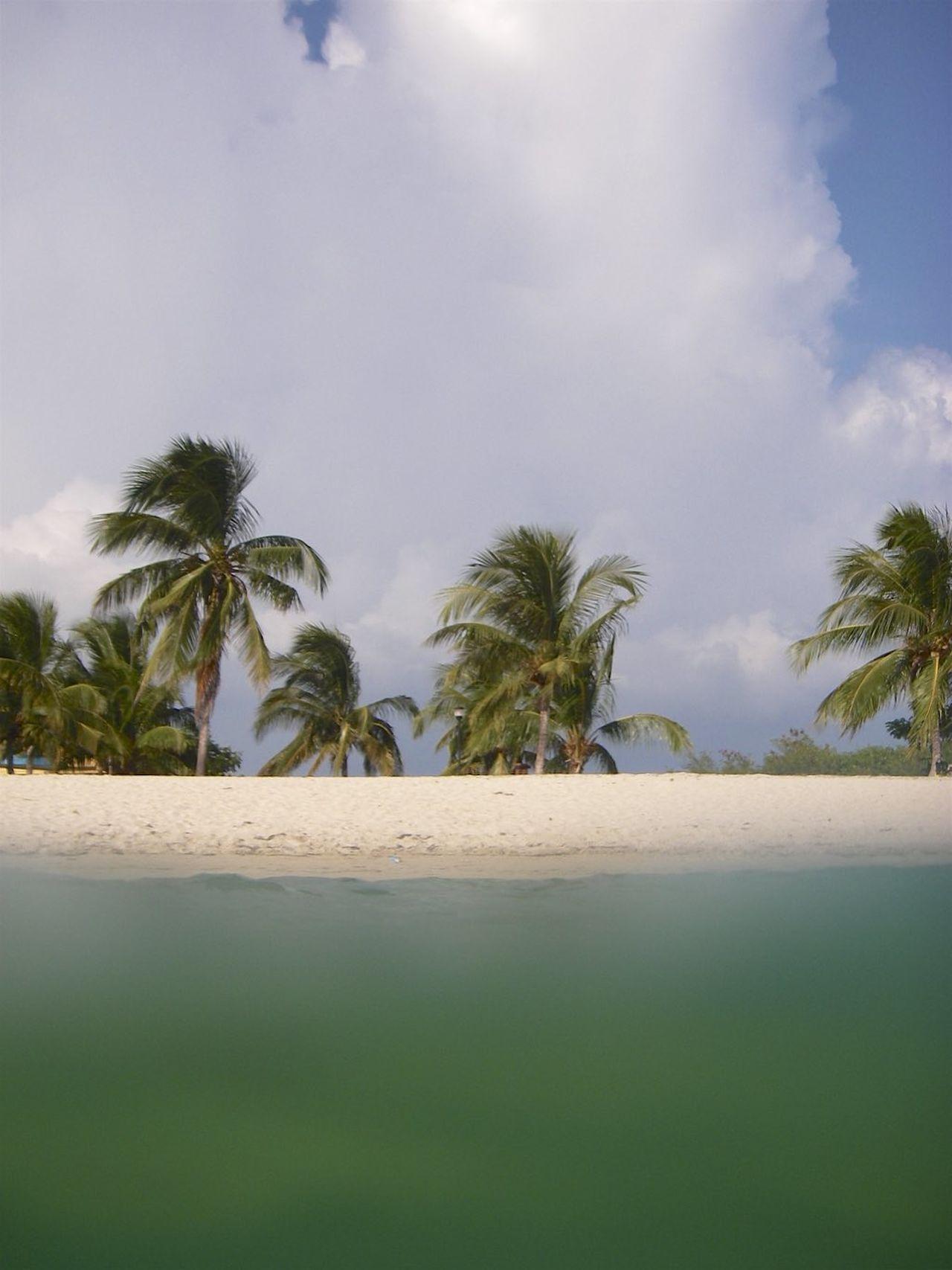 Private Beach Alone Beach Coconut Palm Tree Cuba Escapism Green Sea No People Palm Tree Private Beach Sand Sand & Sea Sea Shore Solitude Tranquility Zen