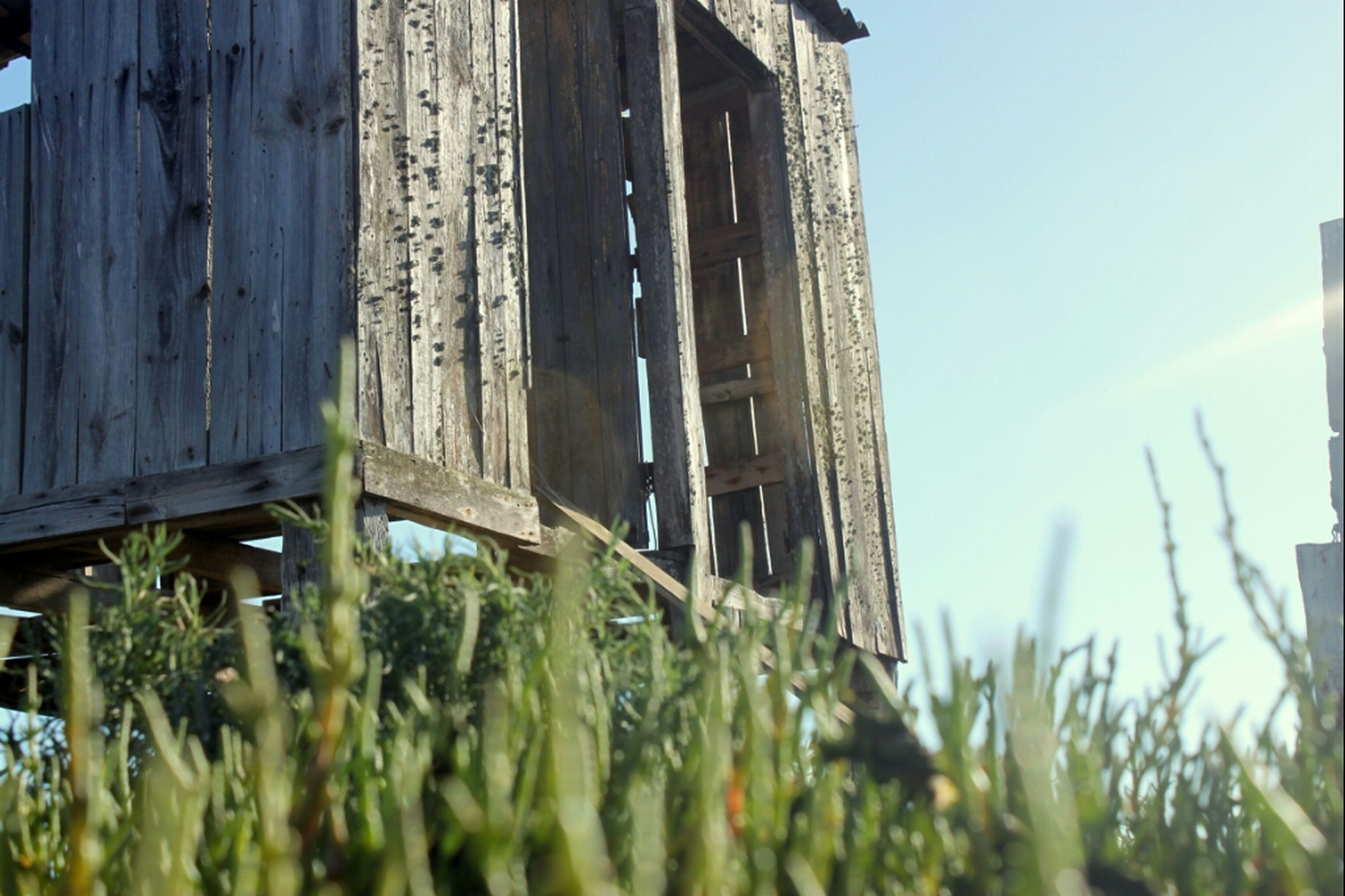 architecture, built structure, building exterior, grass, sky, field, house, plant, wood - material, growth, day, clear sky, abandoned, no people, outdoors, sunlight, low angle view, selective focus, nature, wooden