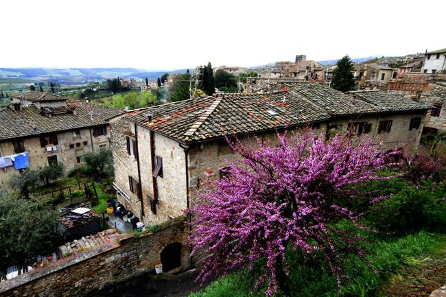 San Gimignano Sangimignano Old Village Old Buildings Old House Spring Flowering Tree Flowering Trees Blooming Spring Spring Time In Italy Spring Time In San Gimignano EyeEm In San Gimignano Urban Spring Fever