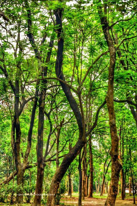 Trees Greentastic EyeEm Nature Lover EyeEm Best Shots - Nature