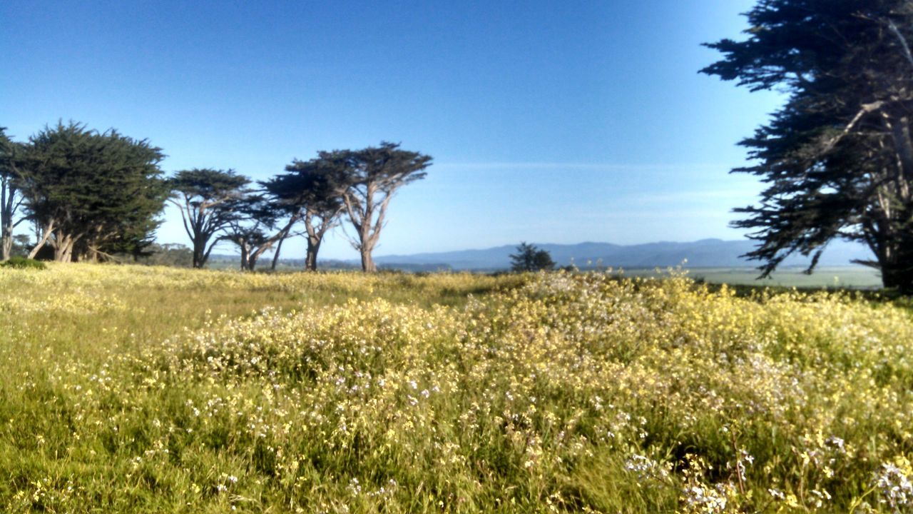 Table Bluff Humboldt County Wildflowers Taking Photos Hanging Out California Enjoying Life Landscape Exploring Things I Like Mylife Take A Break North Coast Trees And Sky Smartphonephotography Motorola Lobuephotos Mobile Photography EyeEm Landscape Colour Of Life My Year My View