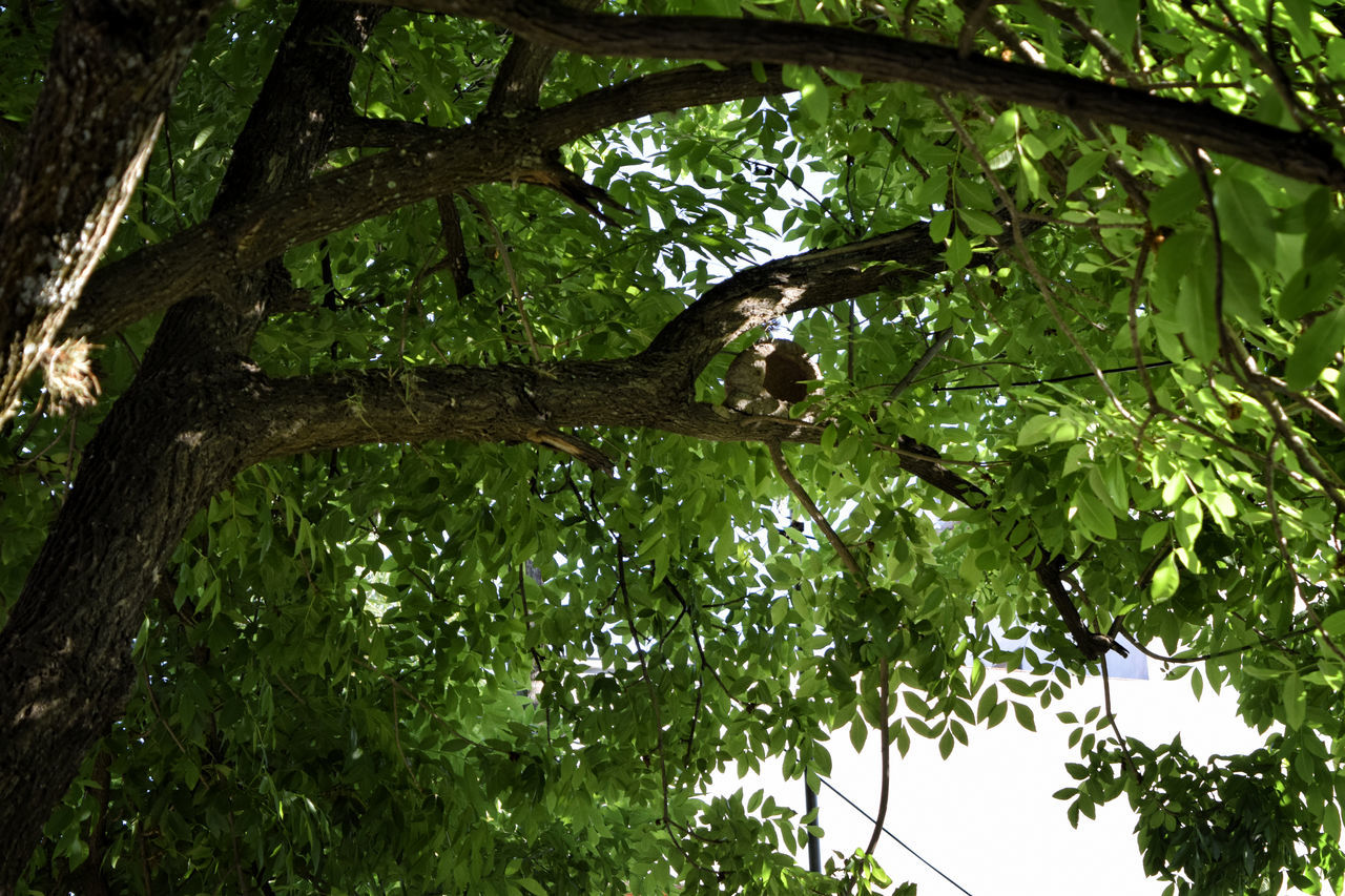 Backgrounds Beauty In Nature Branch Close-up Day Foliage, Vegetation, Plants, Green, Leaves, Leafage, Undergrowth, Underbrush, Plant Life, Flora Forest Green Green Color Green Color Growth Hose Of Birds Leaves And Branches Low Angle View Moments Of Nature Nature No People Outdoors Shades Of Nature Tranquility Tranquility Scene Tree Tree Tree Shade Vegetation