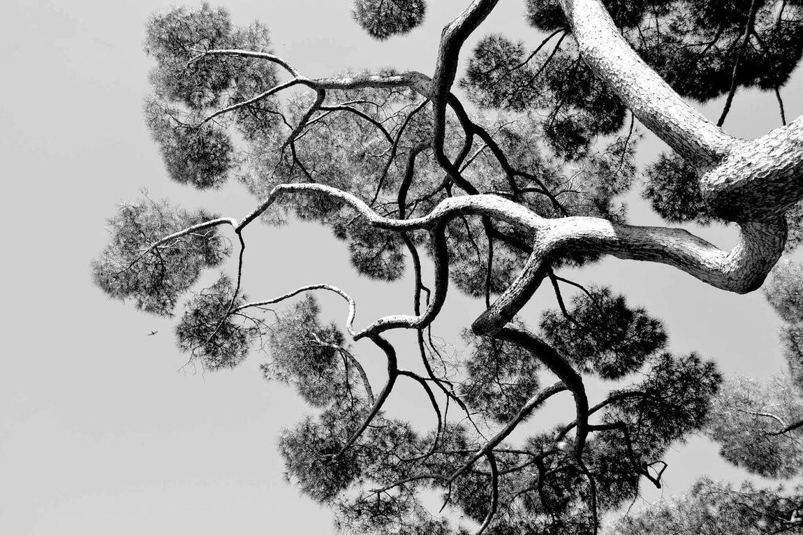 Bastia La Corse 2B Arbre Nature Noir Et Blanc NikonD3100