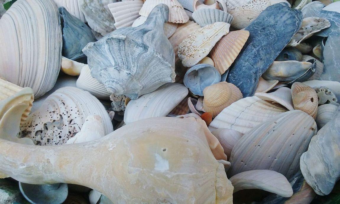 Outdoors Lifebythesea Beauty In Nature Beachlife Sea Beach Ocean Seashells Oceantreasures Seashell Close-up