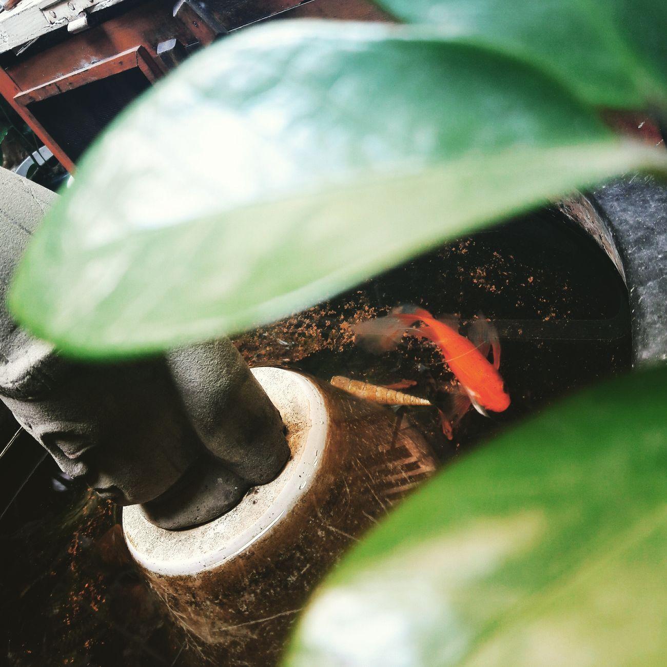 She ^^ Zen Zen Garden Pic Of The Day