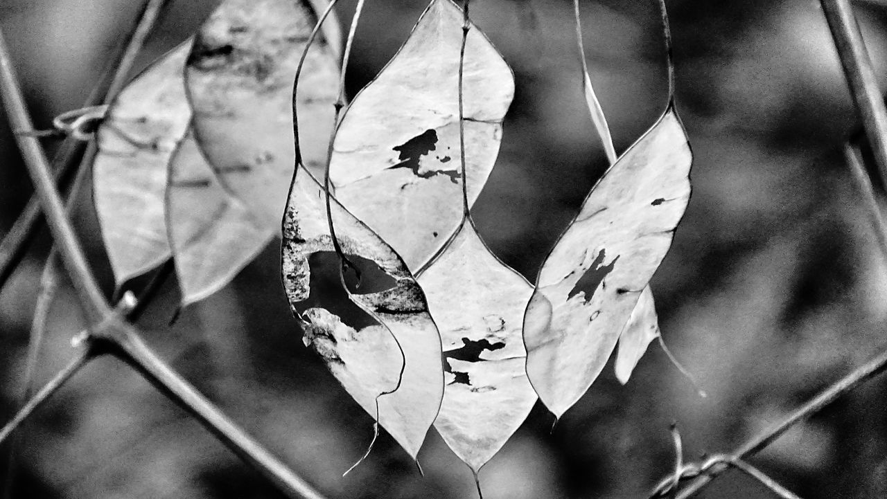 Seen on todays hiking tourTaking Photos Taking Pictures Zoomzoom Nature_collection Nature Photography Leaves_collection Leaves Hiking Blackandwhite Plants And Flowers Branches Winterwald Winter