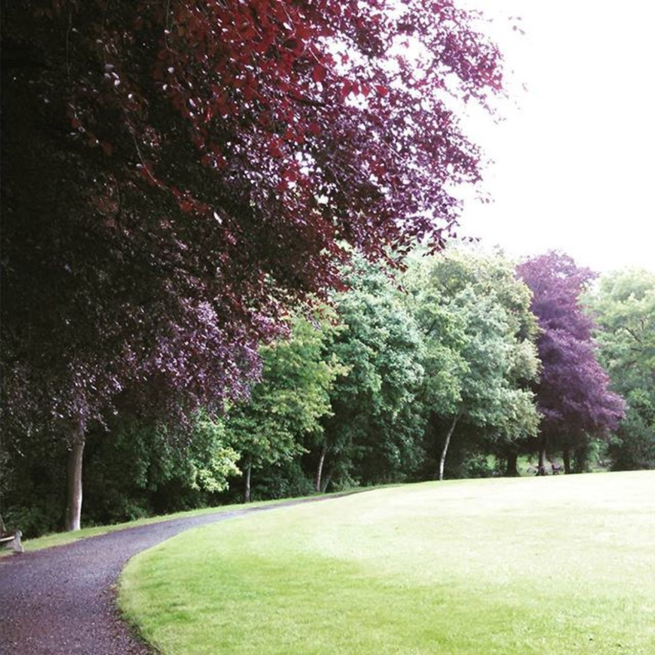 Simmonspark Okehampton OKE Parklife beautiful ilovethisplace devonlife devon