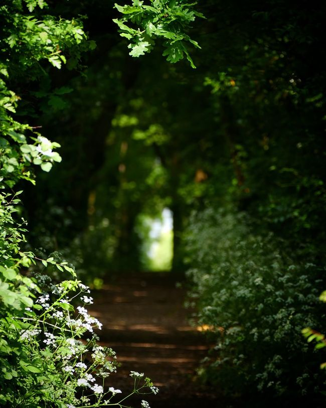 Path in the Woods Mysterious Copse Nature Walk Apuldram Chichester Harbour England Oak Trees