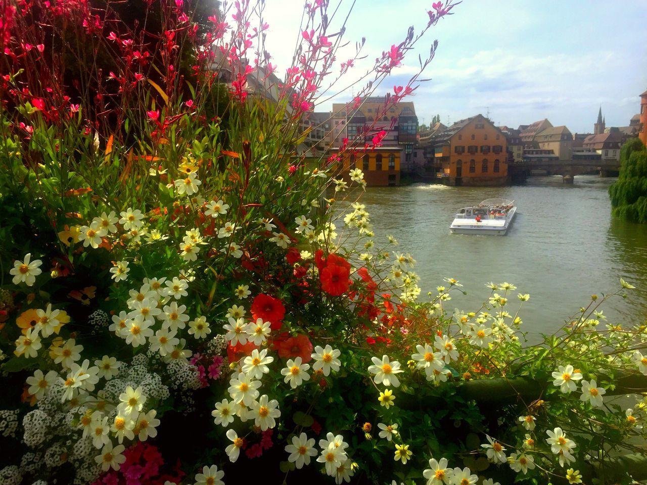 Flowers Enjoying Life Nature Life France Seyehat Fransa Nehir Rems Tourism Tourist Gezinti Tarihi Tarih  History