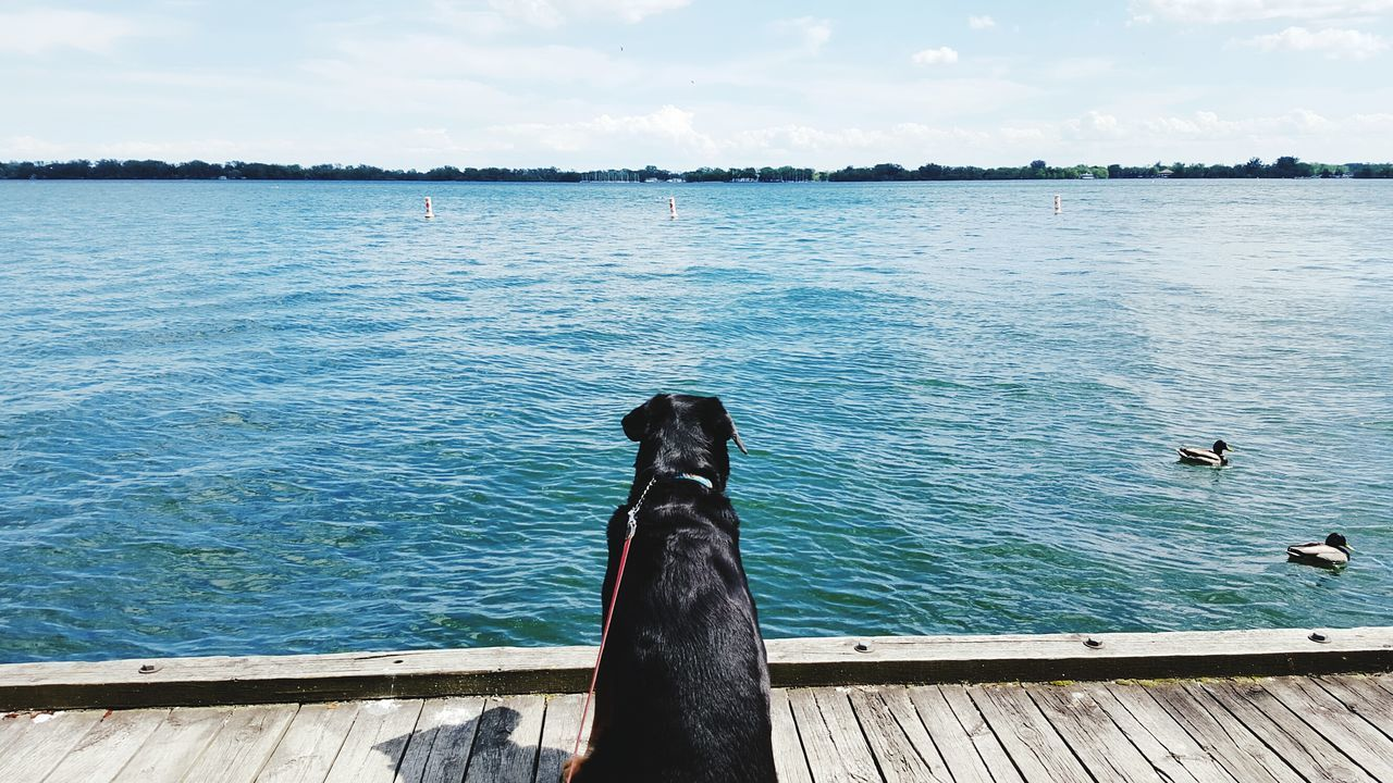 Harbourfront Water Sky Outdoors Day Dog Toronto Waterfront Summer Peaceful Ducks City