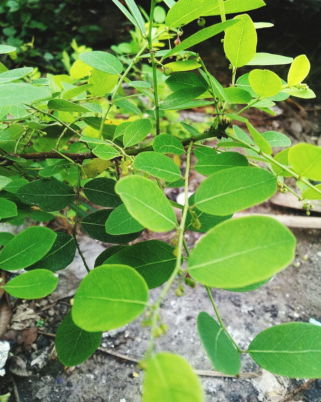 leaf, plant, green color, growth, nature, close-up, day, no people, outdoors, fragility, freshness, beauty in nature