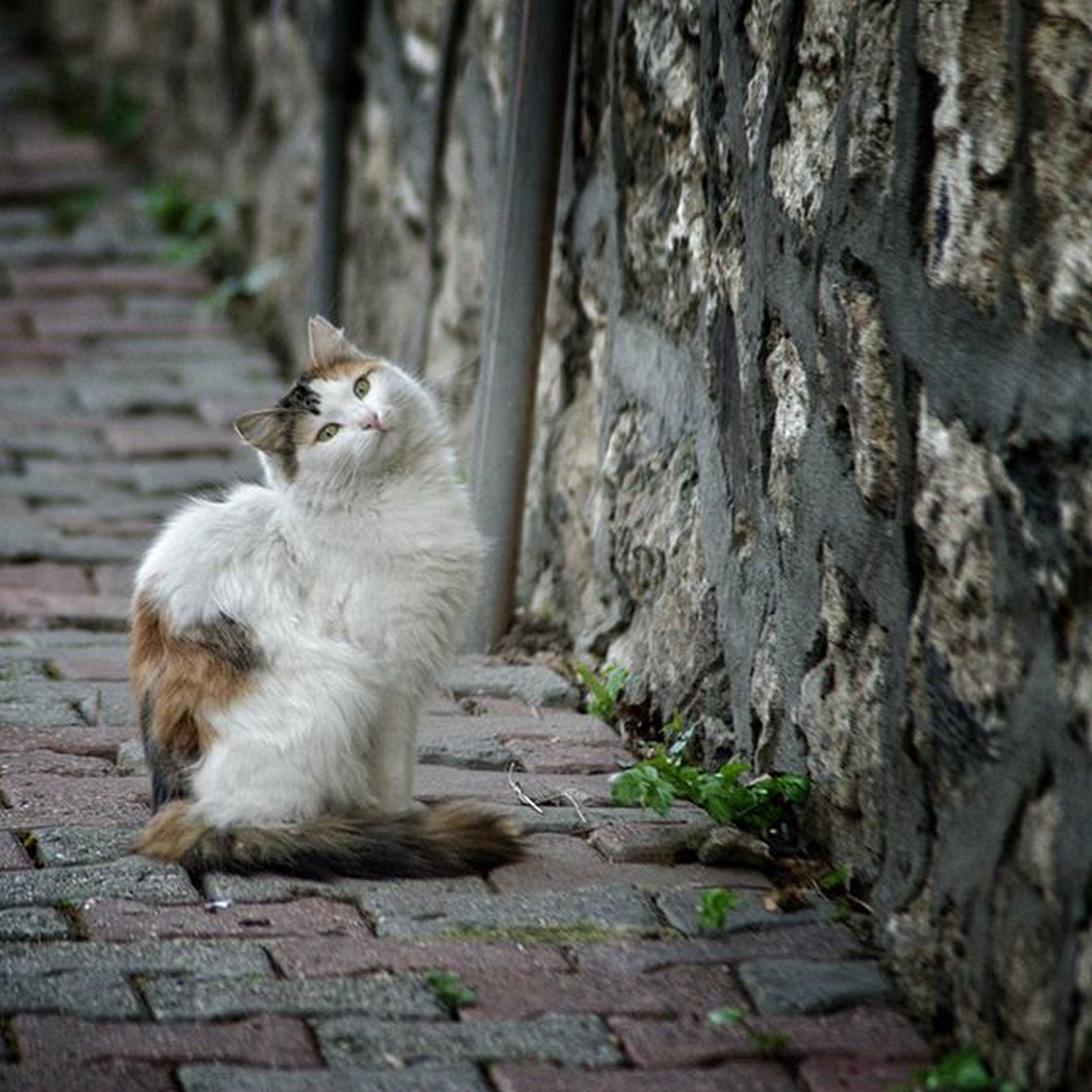 animal themes, mammal, one animal, domestic animals, focus on foreground, stone wall, sitting, pets, steps, outdoors, full length, wildlife, cat, footpath, day, domestic cat, rock - object, no people, relaxation, nature