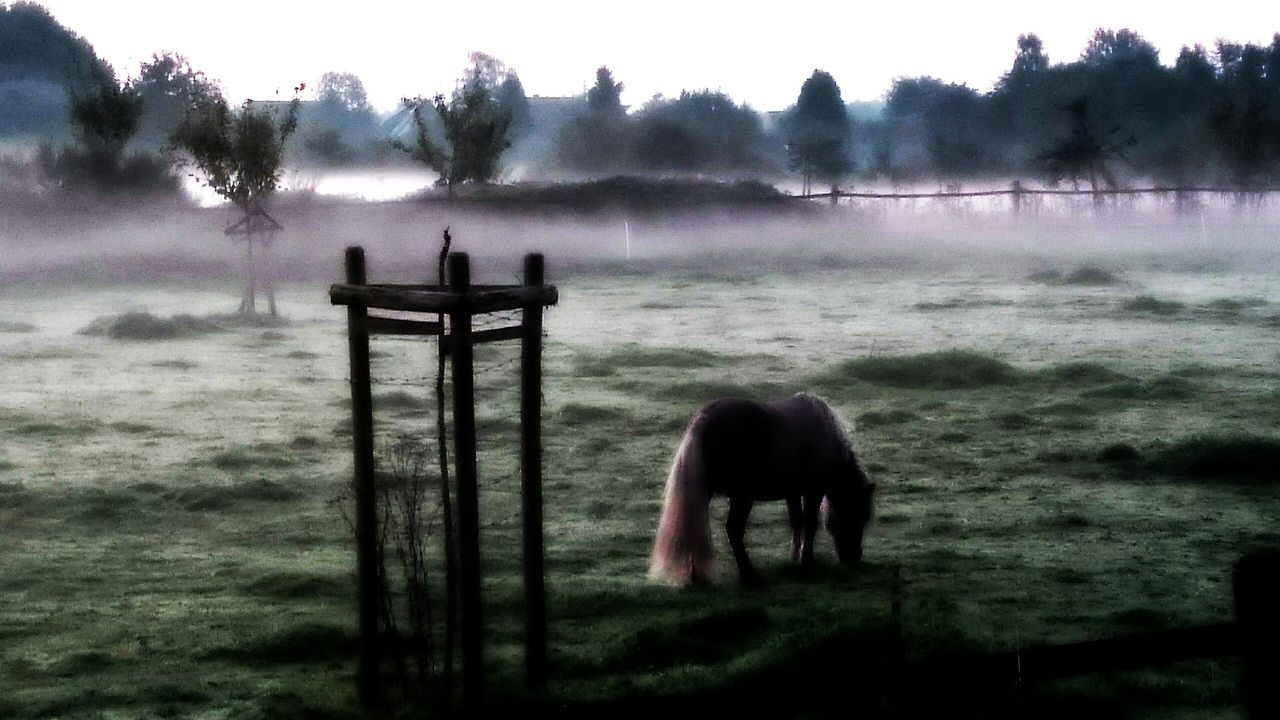 animal themes, one animal, domestic animals, horse, nature, mammal, landscape, outdoors, fog, field, day, tree, livestock, beauty in nature, no people, standing, water, sky, grass, pets, full length