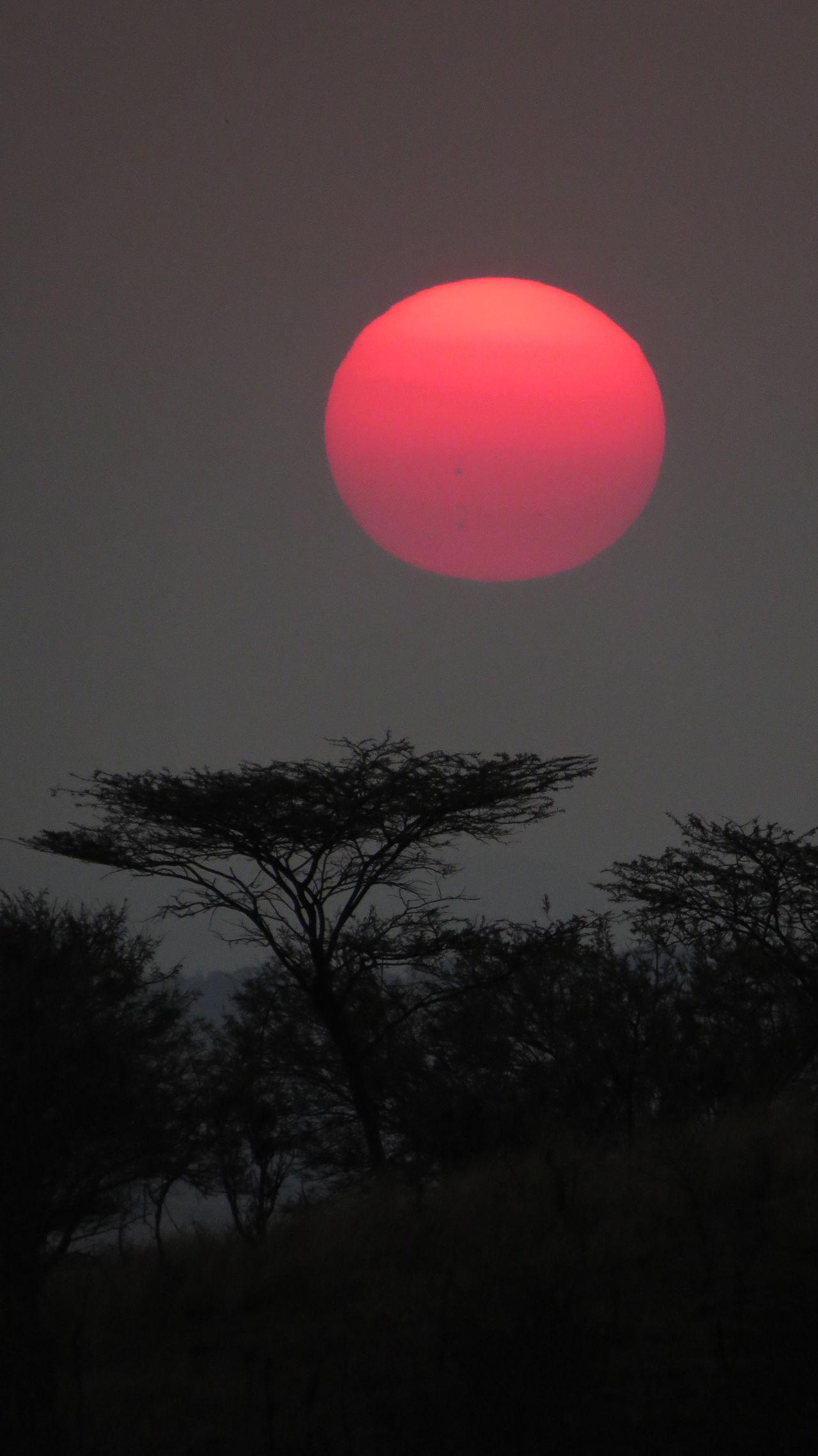 Nature Red Tree Sunset Serengeti National Park