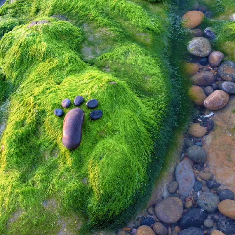 Lonely foot by pebble on green seaweed background, amazing concept on alga surface, art product at seaside Alga Alone Art Beach Boulder Feet Foot FootPrint Fun Green Lonely Nature Paw Pebble Pebbles Rock Rock Background Rocks Seashore Seaside Seaweed Steps Stone Summer Summertime