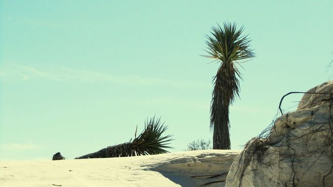 White Sands Coahuila, México Palm Palm Trees Summer North Two Is Better Than One Outdoors Nature Nature_collection Tranquil Scene Taking Photos