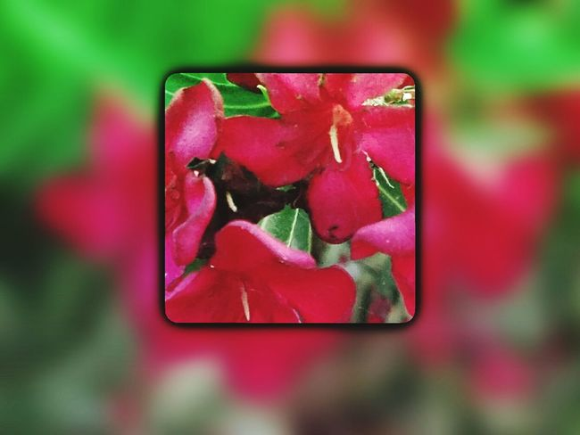 Check This Out Color Explosion Blurred Background Soft Grunge Nature Photography Flower Head Flower Collection Showcase May EyeEmBestEdits Lifeisbeautiful After The Rain MyPlayground Colors Of Nature Playing With Filters