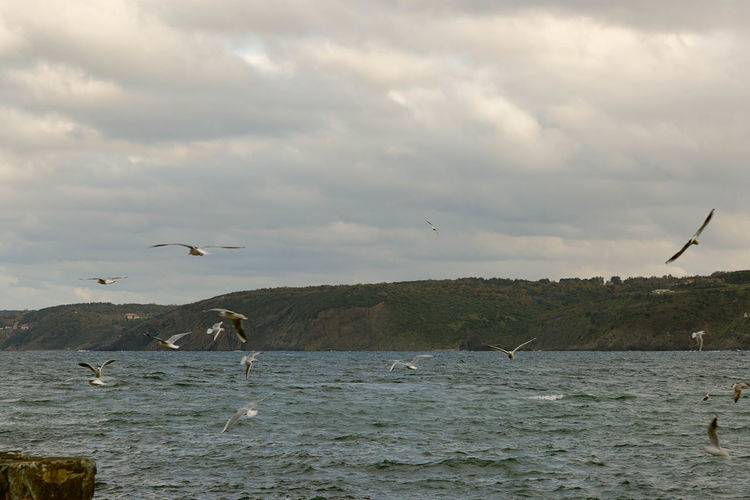 Seagulls on a winter day hovering over the Black Sea. Bay, Beach, Beautiful, Beauty, Big, Blue, Climate, Cloud, Clouds, Cloudy, Coast, Cold, Color, Cyclone, Danger, Dark, Day, Dramatic, Heavy, High, Landscape, Nature, Night, Ocean, Outdoor, Rain, Rock, Scene, Scenic, Sea, Seascape, Shore, Sky, Splash, Storm, Cloudy, Cloud Over, Become Overcast, Lower, Blacken, Darken. Above, Abstract, Air, Atmosphere, Background, Beach, Beautiful, Beauty, Blue, Bright, Cloud, Cloudy, Coast, Concept, Cover, Cumulus, Design, Europe, Fly, Freedom, Heaven, High, House, Landscape, Light, Natural, Nature, Old, Over, Peace, Plane, Rise, Sea,  Animal, Background, Beach, Beak, Beautiful, Bird, Birds, Black, Blue, Cloud, Clouds, Coast, Coastal, Concept, Dramatic, Feather, Flight, Fly, Free, Freedom, Gull, Hills, Holiday, Landscape, Looking, Mountain, Mountains, Nature, Ocean, Outdoor, Outdoors, R Animal, Background, Beach, Beauty, Big, Bird, Black, Blue, Brown, Bubbles, Bulgaria, Day, Empty, Europe, Free, Green, Landscape, Legs, Liquid, Looking, Morning, Motion, Nature, Nobody, Ocean, Outdoor, Outdoors, Power, Reflection, Resort, Scene, Sea, Seasc Marine, Ocean, Oceanic; Saltwater, Seawater; Oceangoing, Seagoing, Seafaring; Maritime, Naval, Nautical Outdoors Turkey, Istanbul, Rumeli Feneri, Black Sea, Bosphorous, Water Waves, Swell, Breakers, Rollers, Combers.