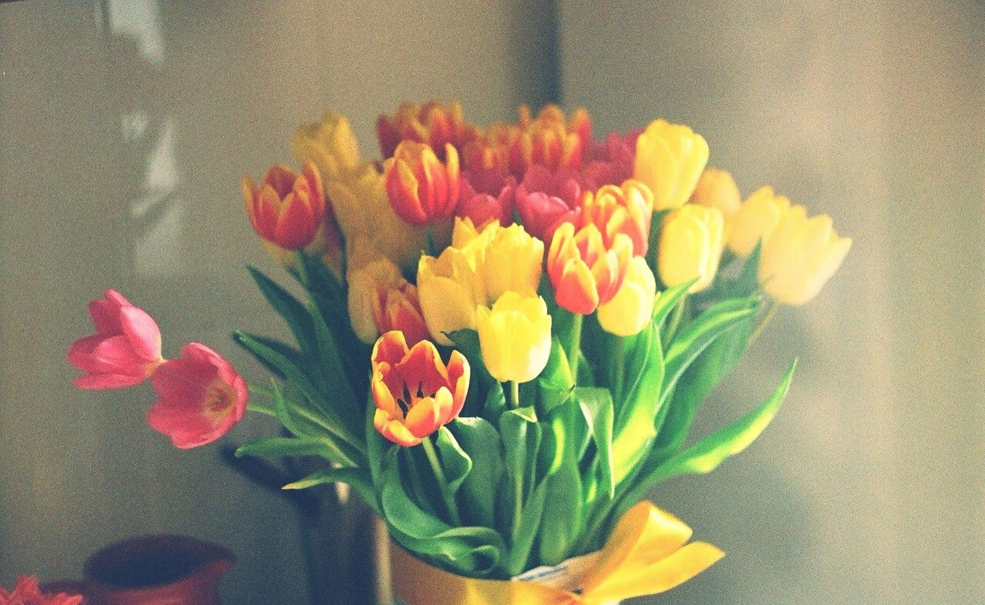 flower, freshness, petal, fragility, flower head, indoors, vase, beauty in nature, tulip, plant, multi colored, growth, nature, leaf, yellow, flower arrangement, close-up, wall - building feature, bouquet, rose - flower