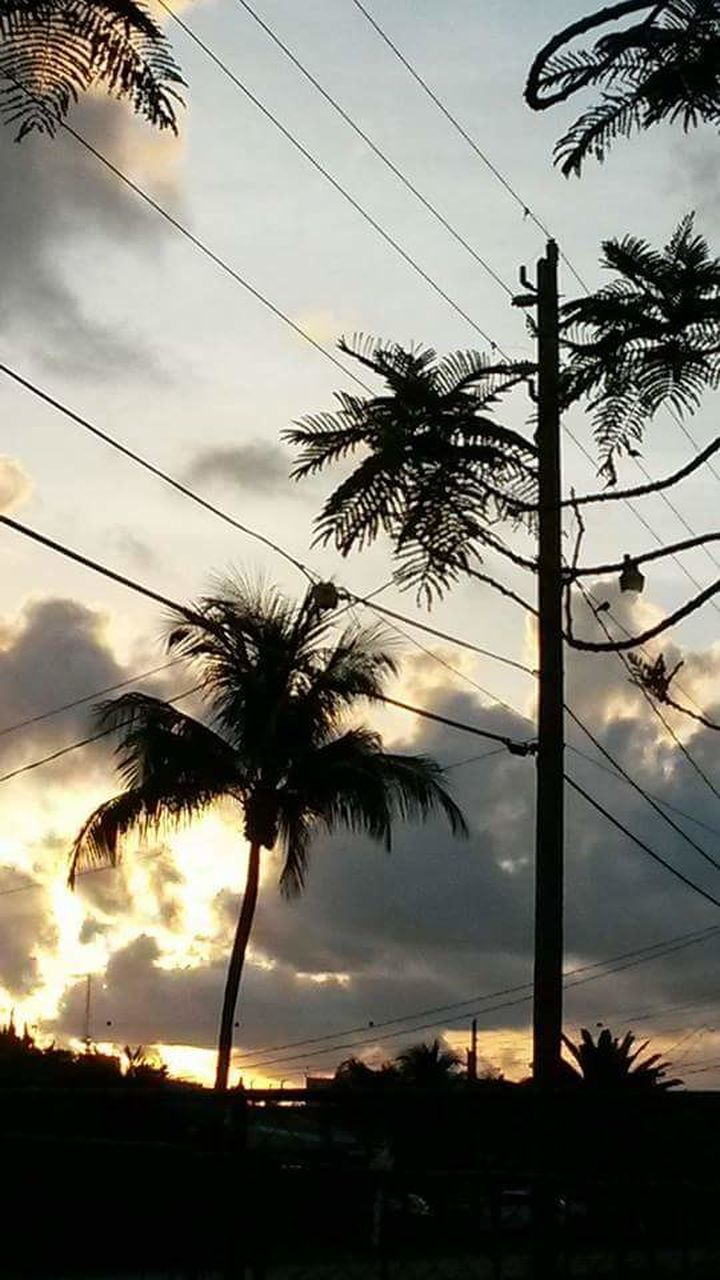 palm tree, tree, cable, sunset, cloud - sky, power line, sky, silhouette, low angle view, nature, beauty in nature, scenics, electricity, connection, power supply, electricity pylon, outdoors, no people, tranquil scene, tranquility, tree trunk, telephone line, technology, day