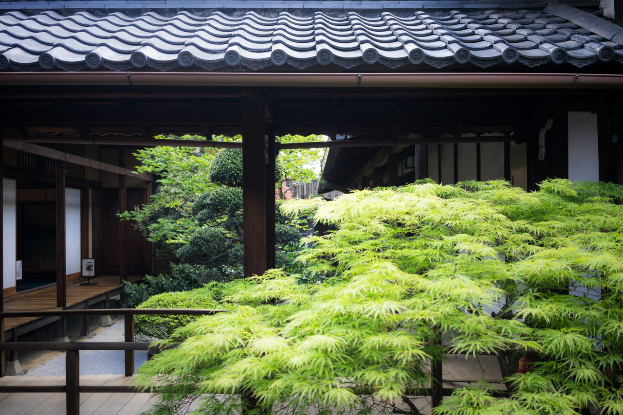 Architecture Building Exterior Built Structure Day Garden Green Color Growth Growth House Japan Houses Japanese Architecture Japanese Garden Kyoto,japan No People Plant Roof Tea Ceremony Tree 凛 鈴 風流