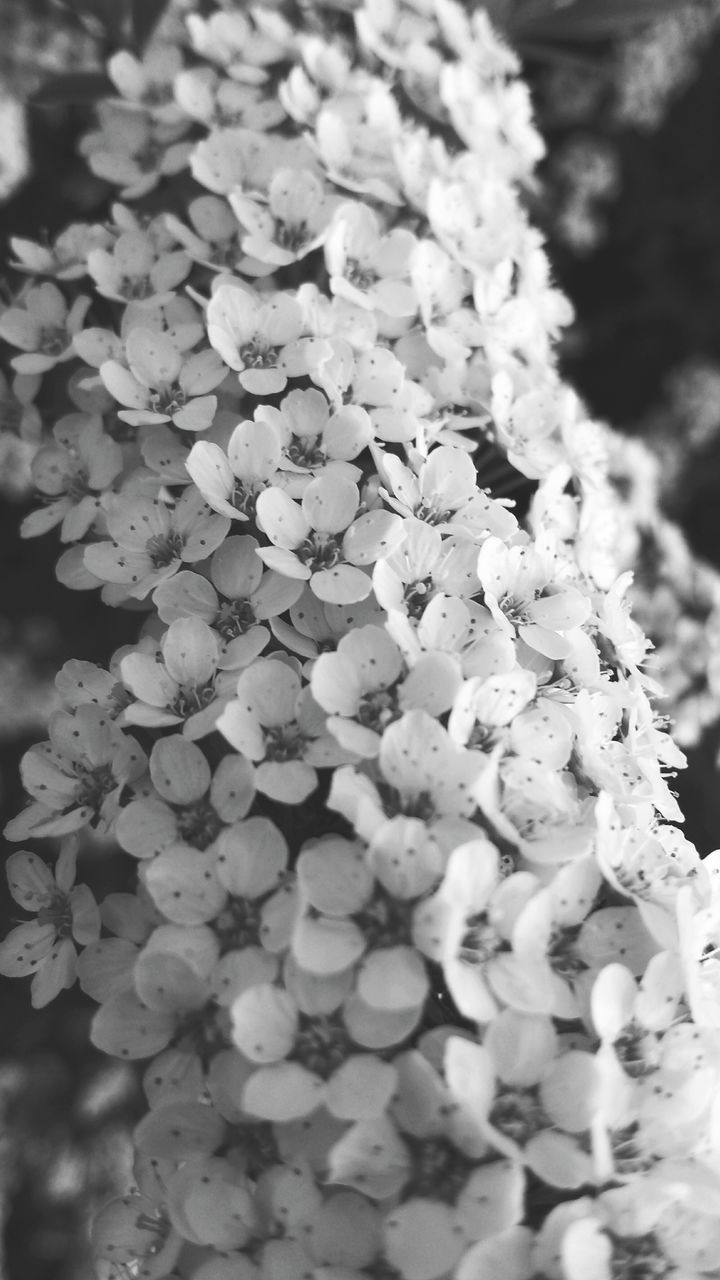 flower, fragility, growth, freshness, petal, nature, beauty in nature, no people, outdoors, day, close-up, flower head