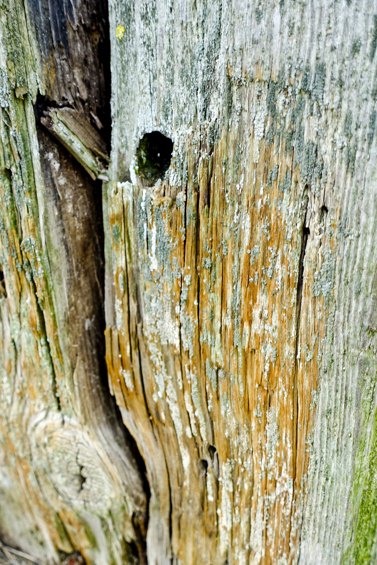 Coloured patterns on a wooden groyne at West Wittering beach in West Sussex Chichester Chichester Harbour Coast Coastline England England, UK England🇬🇧 Groyne Groynes Sea West Sussex West Wittering Wooden