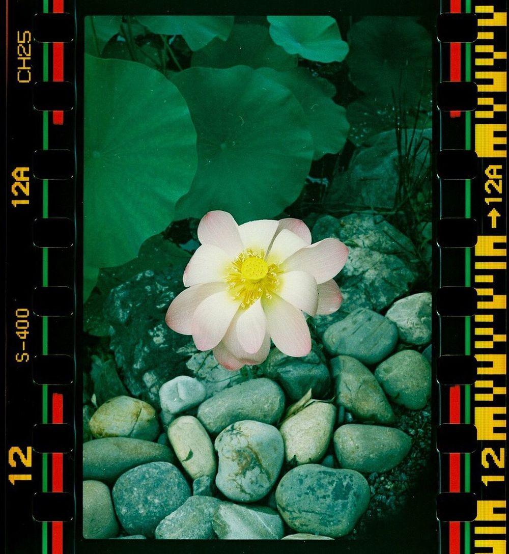 Canon A-1 50mm FD F1.8 Digitized Photo Sprocket Sprocket Process Norfolk Va Norfolk Botanical Gardens