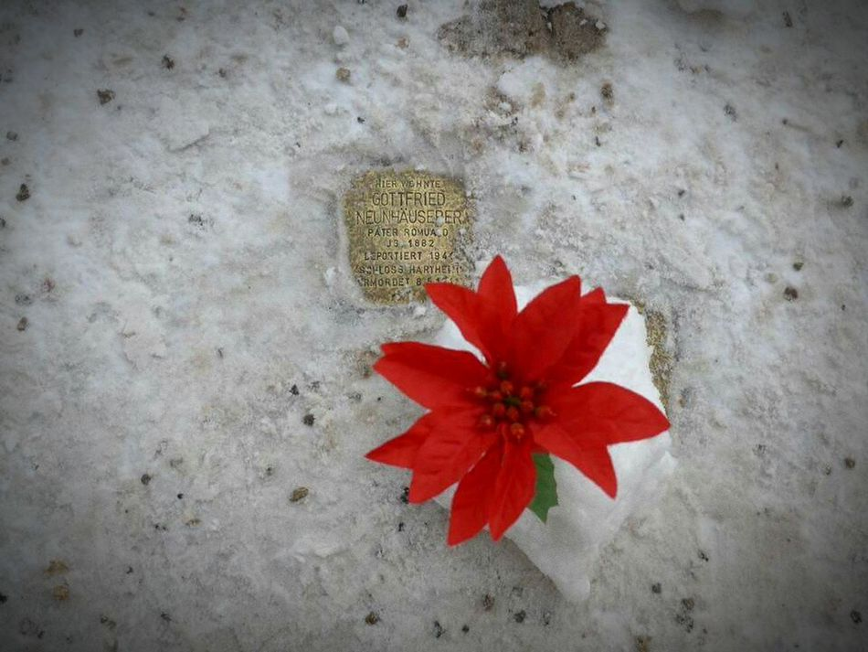 Stolpersteine - Stumbling Blocks Stolpersteine Salzburg, Austria Flower High Angle View Fragility Red Nature No People Day Outdoors Petal Close-up Beauty In Nature Flower Head Freshness
