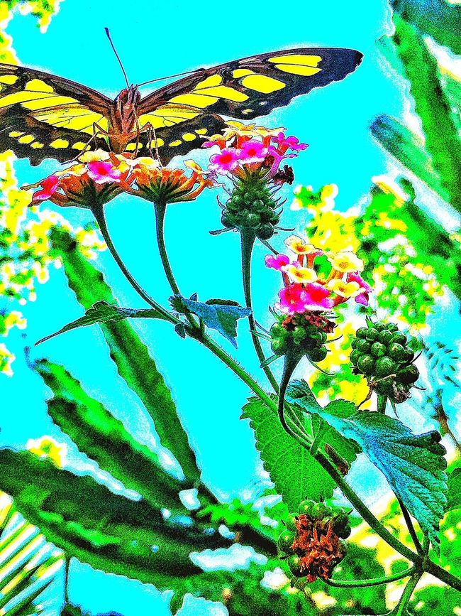 Great day of shooting beatiful butterflies Butterfly Beauty Alamos Day Of Shooting Showcase: January Chuylui Photography