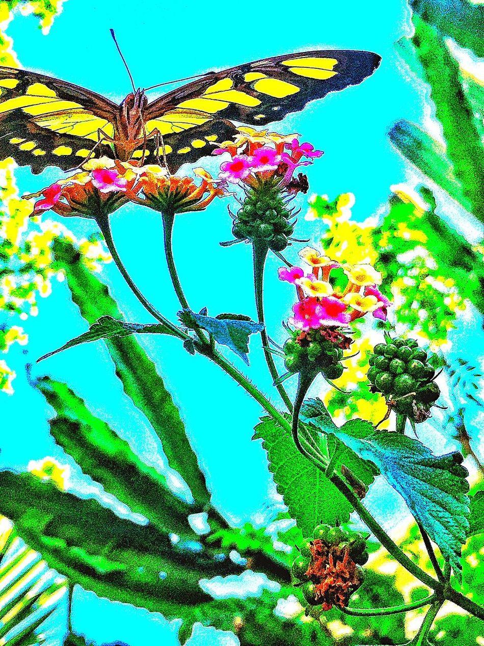 Great day of shooting beatiful butterflies Butterfly Beauty Alamos Day Of Shooting Showcase: January Chuylui Photography