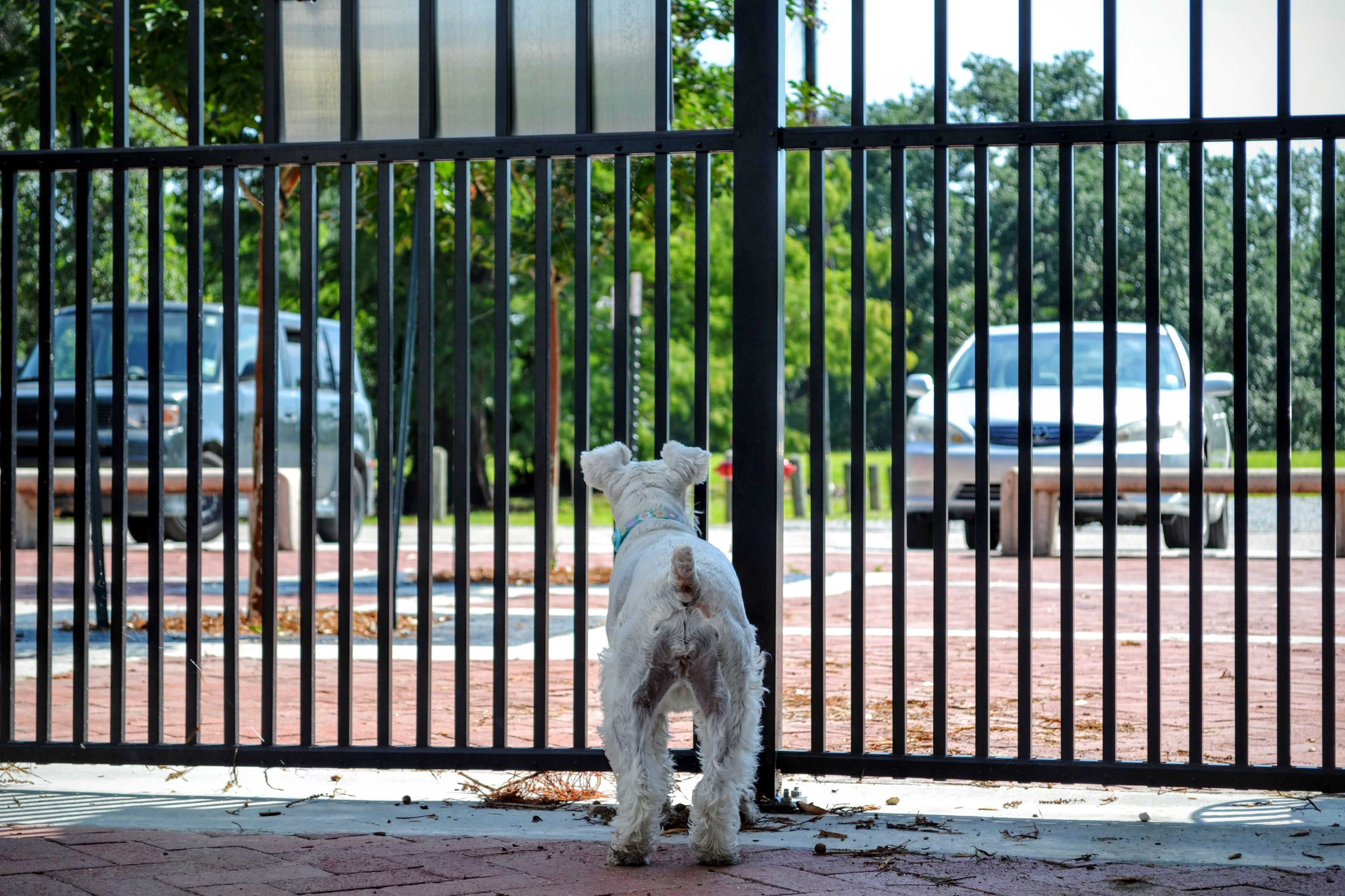 one animal, animal themes, pets, cage, domestic animals, full length, mammal, nature, watching, no people, day, tree, outdoors