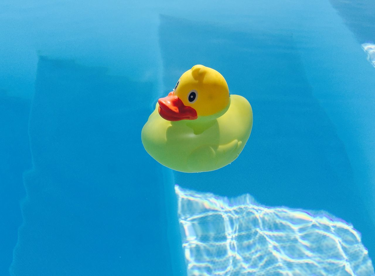 Beautiful stock photos of pool, Animal Representation, Blue, Day, Floating On Water