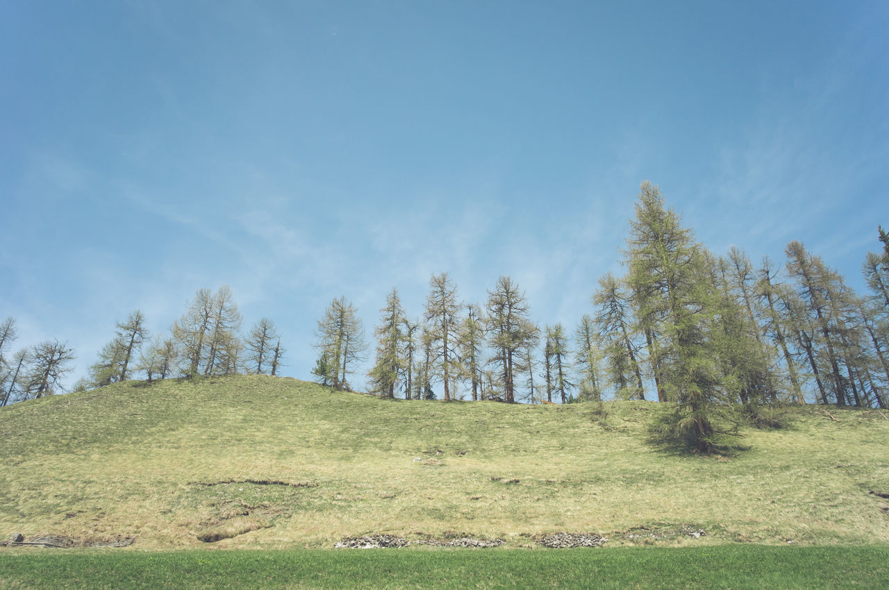 tree, nature, tranquility, beauty in nature, tranquil scene, landscape, grass, day, scenics, growth, no people, outdoors, sky, forest